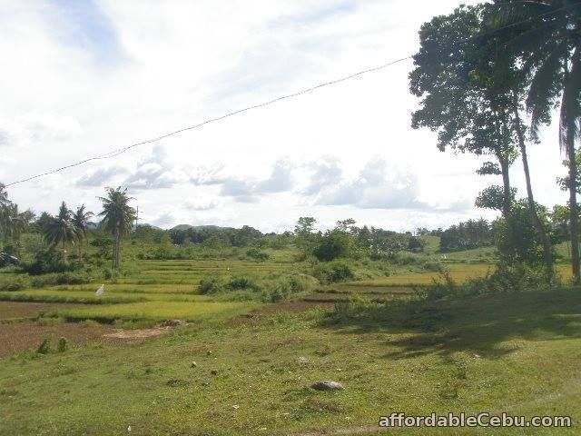 2nd picture of Farm Lot For Sale in Ubay, Bohol For Sale in Cebu, Philippines