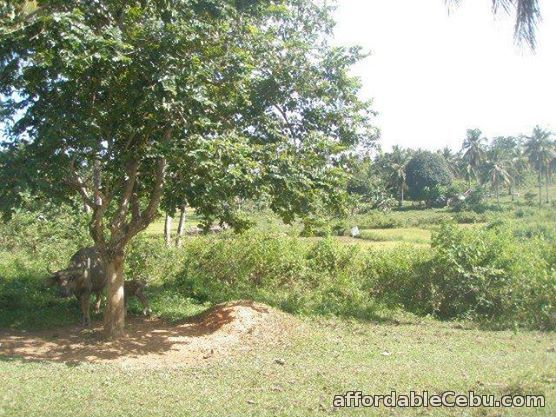 1st picture of Farm Lot For Sale in Ubay, Bohol For Sale in Cebu, Philippines