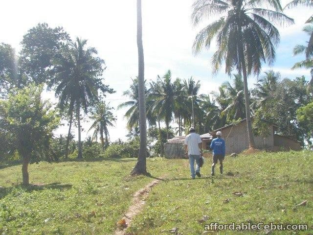 3rd picture of Farm Lot For Sale in Ubay, Bohol For Sale in Cebu, Philippines