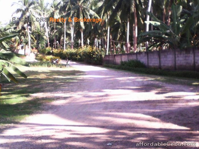2nd picture of Beach Resort for sale in Tabuelan Cebu 3,692 sqm For Sale in Cebu, Philippines