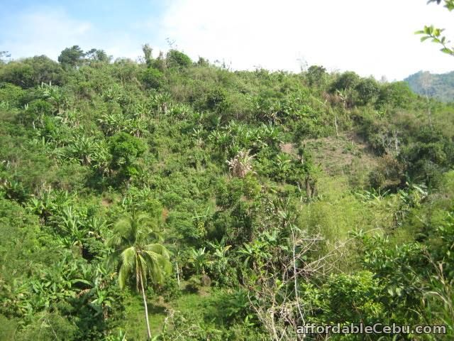 3rd picture of 8 hectares Lot for sale in Toledo City Cebu 09233983560 For Sale in Cebu, Philippines