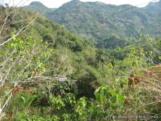 2nd picture of 8 hectares Lot for sale in Toledo City Cebu 09233983560 For Sale in Cebu, Philippines