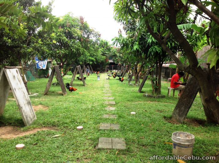 1st picture of house & lot (farm) For Sale in Cebu, Philippines