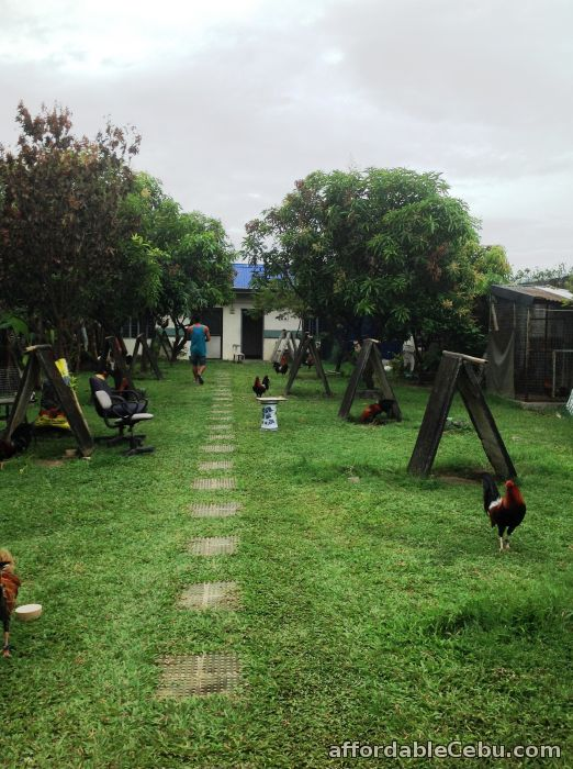2nd picture of house & lot (farm) For Sale in Cebu, Philippines