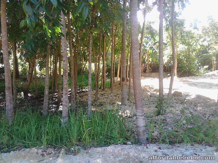 3rd picture of Land for sale in Mandaue City Cebu 7,825 square meters For Sale in Cebu, Philippines