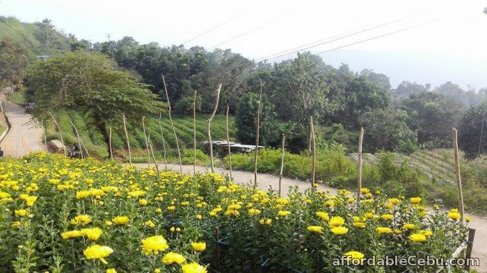 4th picture of Affordabe lot only for sale in sibugay, cebu city For Sale in Cebu, Philippines