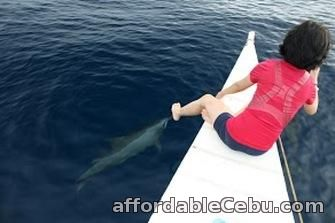1st picture of Bais Dolphin Watching, Budget Offer in Cebu, Philippines