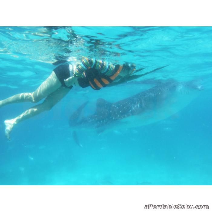 1st picture of Cebu tour package with whale watching in Oslob Offer in Cebu, Philippines