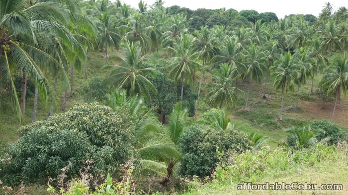 5th picture of Farm Land in Compostela For Sale in Cebu, Philippines