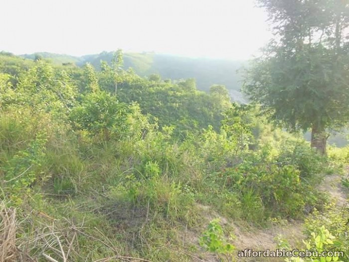 2nd picture of Lot for sale in Tubod Minglanilla Cebu For Sale in Cebu, Philippines
