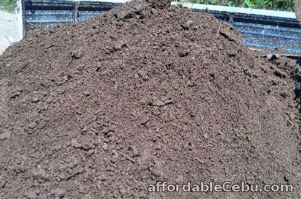 5th picture of Frog Grass, Bermuda Grass, Garden Soil & Landscaping Landscape For Sale in Cebu, Philippines