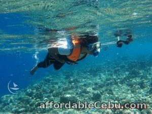 1st picture of Magnificent Sea Heaven, Bohol tour package Offer in Cebu, Philippines
