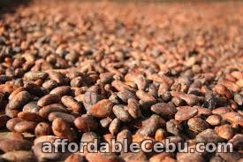 1st picture of Cacao Beans in Cebu For Sale in Cebu, Philippines