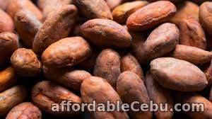 2nd picture of Cacao Beans in Cebu For Sale in Cebu, Philippines