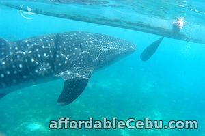1st picture of Cebu Bohol tour package, 5 days Offer in Cebu, Philippines