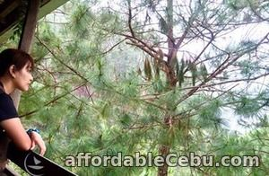 1st picture of Enjoy the cool weather, Baguio tour package Offer in Cebu, Philippines