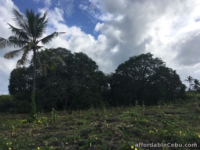 5th picture of Affordable Lot for Sale along Whitebeach Moalboal area For Sale in Cebu, Philippines