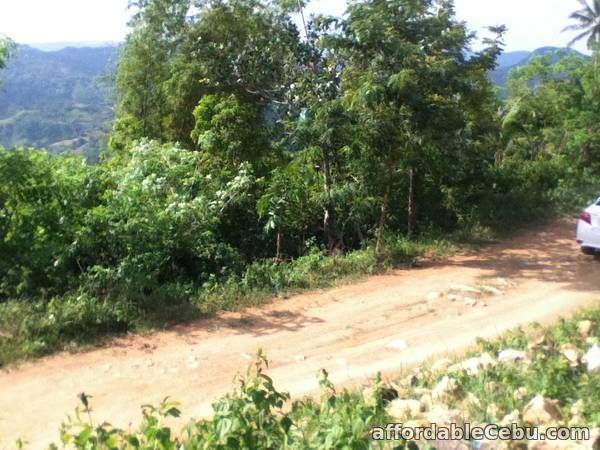 1st picture of Farmland for Sale For Sale in Cebu, Philippines