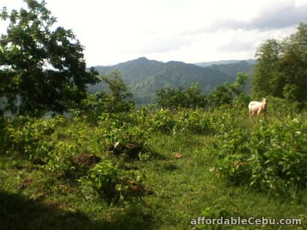 1st picture of Farmlot for Sale For Sale in Cebu, Philippines