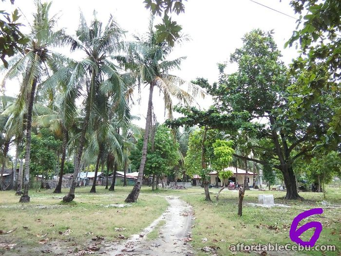 2nd picture of 9400sqm Beach Lot with fully furnished concrete house in Olango, Cebu For Sale! For Sale in Cebu, Philippines