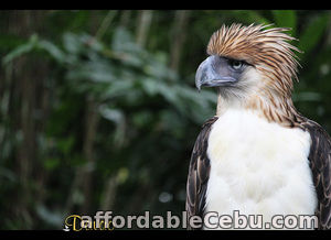 2nd picture of Covering Highlights, Davao tour packages - Davao City Offer in Cebu, Philippines