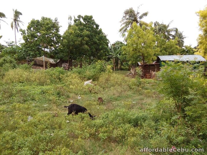 4th picture of For Sale 13,300+sq.m Beach Lot in Olango, Cebu For Sale in Cebu, Philippines
