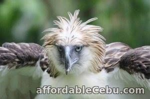 1st picture of Davao tour packages Offer in Cebu, Philippines