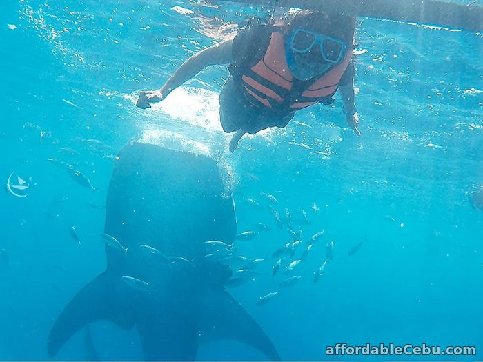 1st picture of 3 days Cebu tour package with Oslob whale watching Offer in Cebu, Philippines