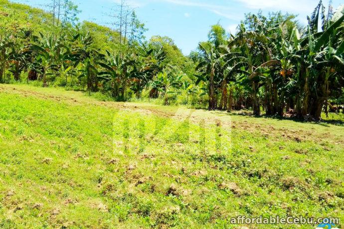 1st picture of Kardava Hillside Subdivision(LOT ONLY) Tabunoc 2, Maslog, Danano City Cebu For Sale in Cebu, Philippines