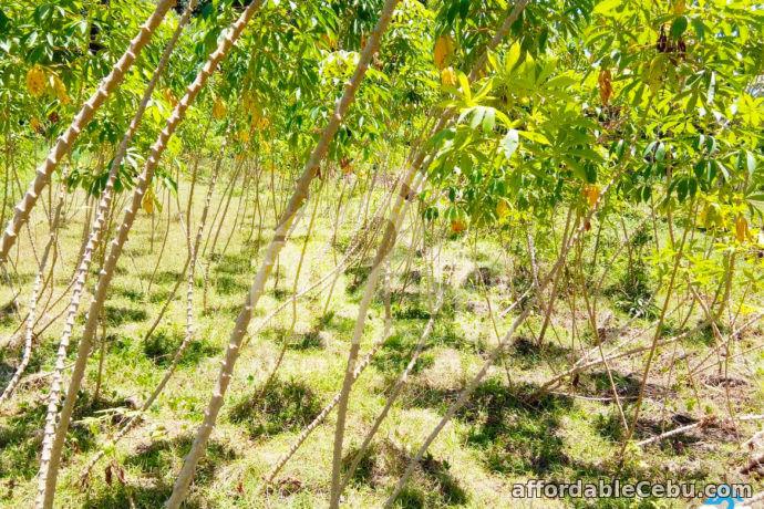 3rd picture of Kardava Hillside Subdivision(LOT ONLY) Tabunoc 2, Maslog, Danano City Cebu For Sale in Cebu, Philippines