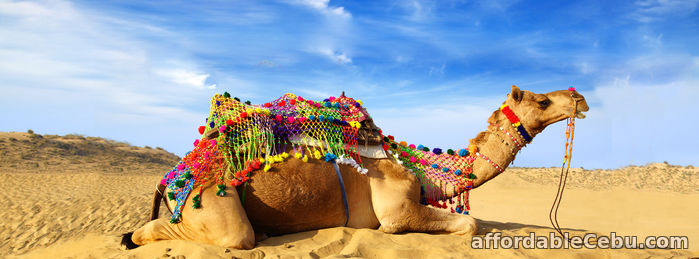 1st picture of Pushkar Camel Fair 2018 Offer in Cebu, Philippines