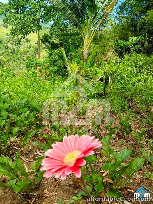 3rd picture of Green Valley Heights(LOT ONLY) Babag, Cebu City For Sale in Cebu, Philippines