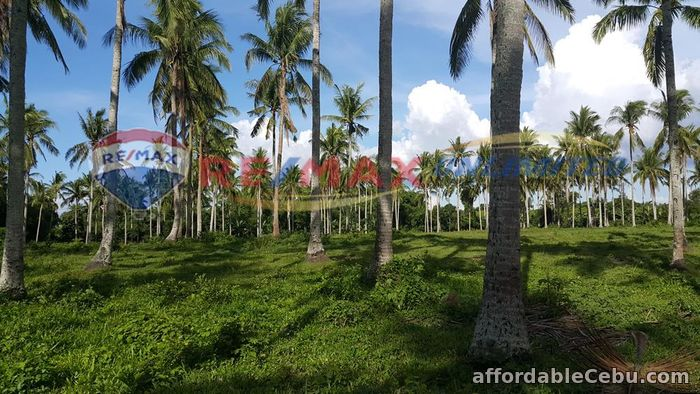 4th picture of PADRE GARCIA BATANGAS FARM LOT FOR SALE For Sale in Cebu, Philippines
