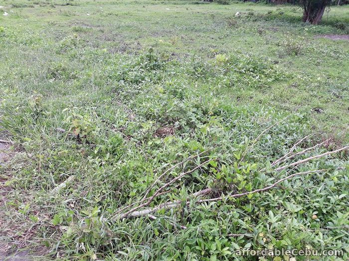 1st picture of RESEDENCIAL LOT For Sale in Cebu, Philippines