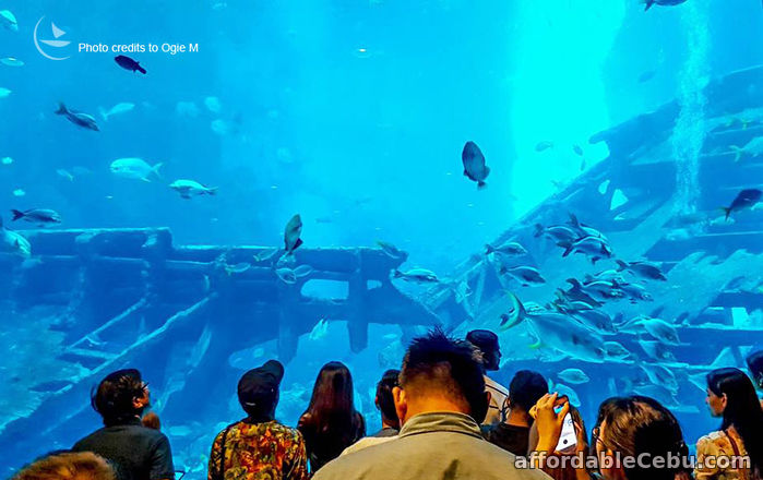4th picture of 3 days Singapore tour package with Universal Studios and SEA Aquarium Offer in Cebu, Philippines