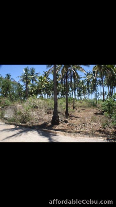 2nd picture of White sand beach lot in Bantayan Island (Atop-Atop) For Sale in Cebu, Philippines