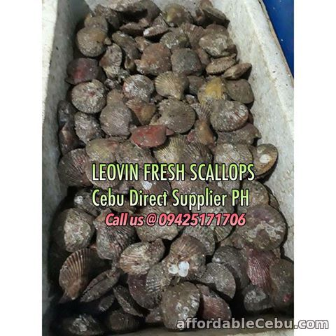 1st picture of FRESH SCALLOPS DIRECT SUPPLIER IN CEBU CITY! For Sale in Cebu, Philippines