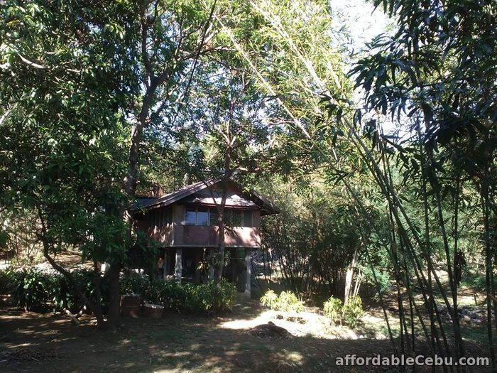 3rd picture of Forest lot for sale with 3 build houses For Sale in Cebu, Philippines