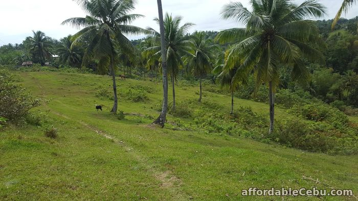 1st picture of Farm for sale For Sale in Cebu, Philippines