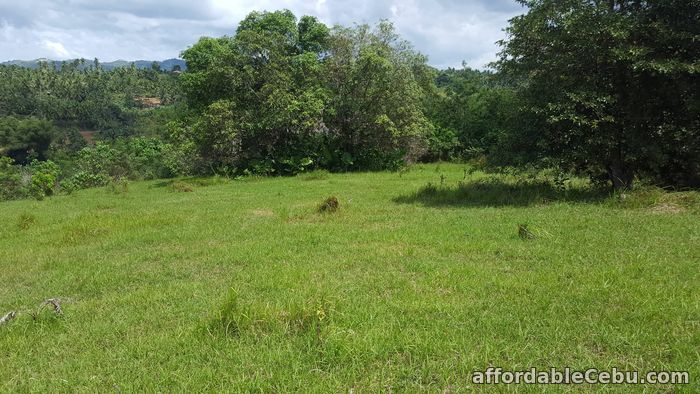 3rd picture of Farm for sale For Sale in Cebu, Philippines