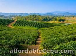 1st picture of Shillong Tour Packages Offer in Cebu, Philippines