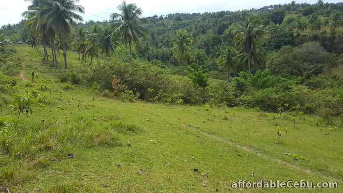 4th picture of Farm for sale For Sale in Cebu, Philippines