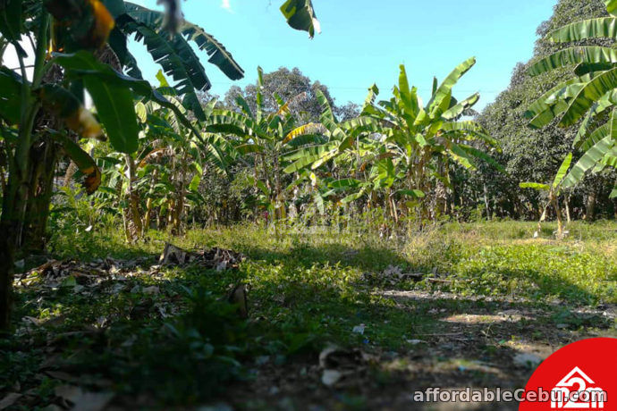 2nd picture of Orland Plains(LOT ONLY) Cogon, Maslog Danao, Cebu City For Sale in Cebu, Philippines