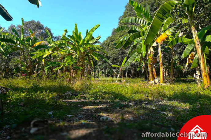 1st picture of Orland Plains(LOT ONLY) Cogon, Maslog Danao, Cebu City For Sale in Cebu, Philippines