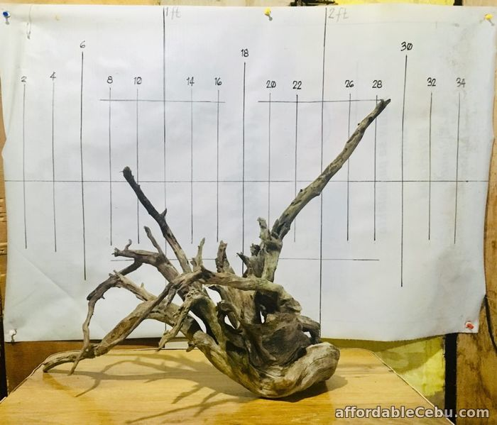 4th picture of AFFORDABLE DRIFTWOODS FOR SALE For Sale in Cebu, Philippines