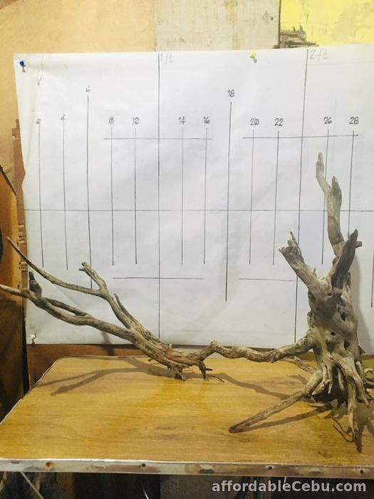2nd picture of AFFORDABLE DRIFTWOODS FOR SALE For Sale in Cebu, Philippines
