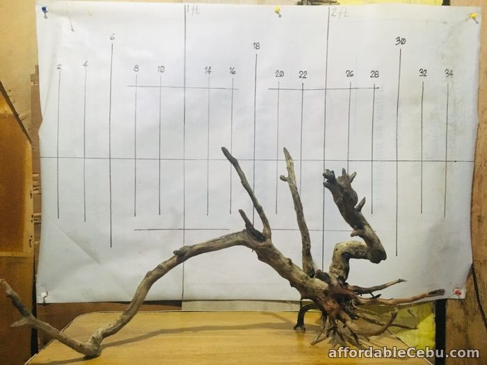 5th picture of AFFORDABLE DRIFTWOODS FOR SALE For Sale in Cebu, Philippines