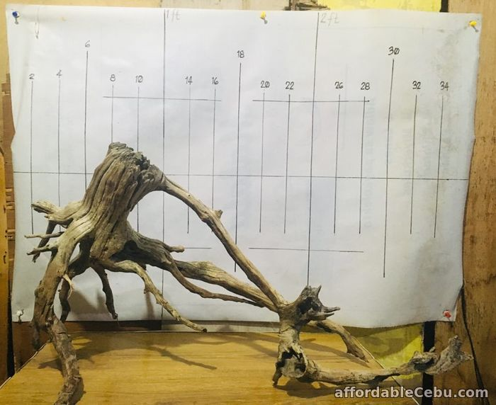 1st picture of AFFORDABLE DRIFTWOODS FOR SALE For Sale in Cebu, Philippines