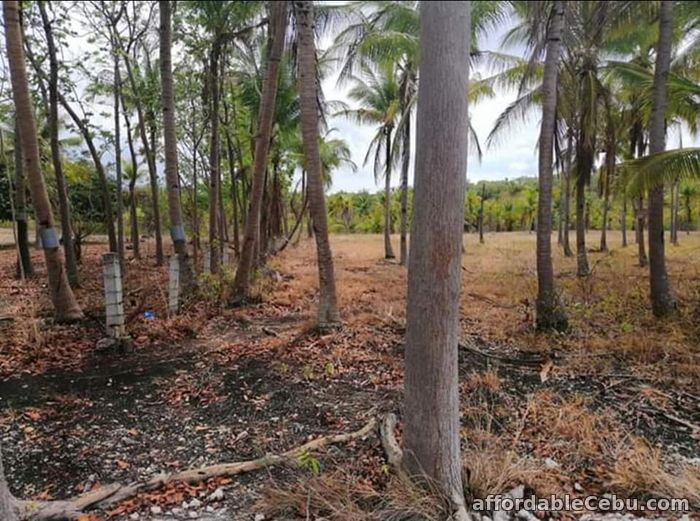 1st picture of Agri/residential lot -1.3 hectare at ₱300 per sqm in Santander Cebu OK TRADE IN For Sale in Cebu, Philippines