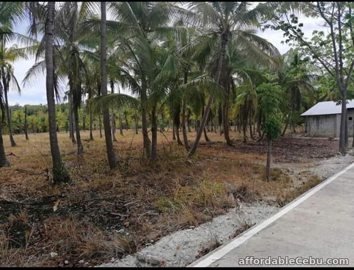 4th picture of Agri/residential lot -1.3 hectare at ₱300 per sqm in Santander Cebu OK TRADE IN For Sale in Cebu, Philippines